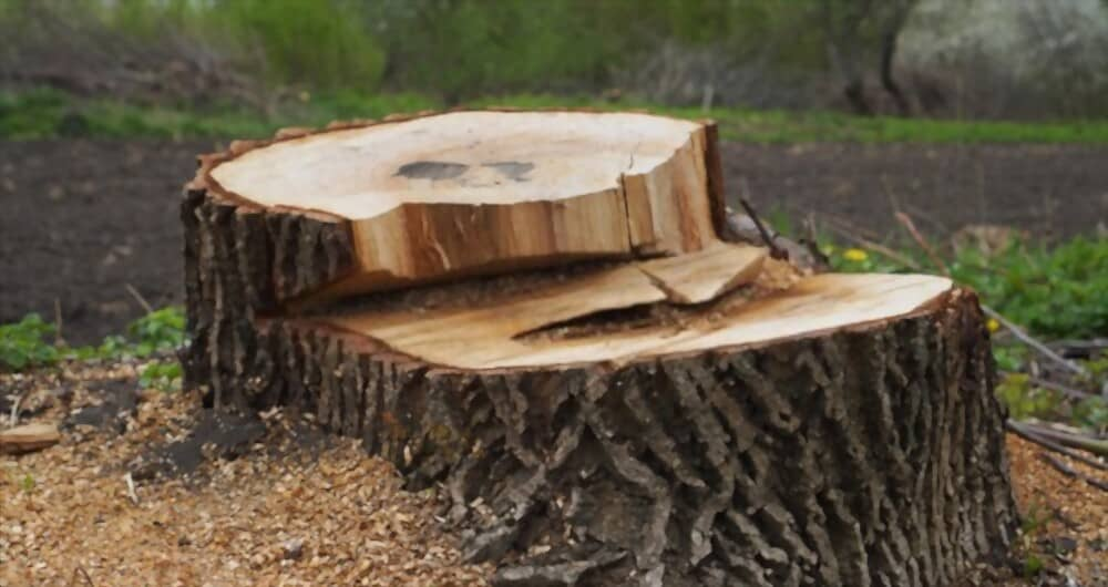 Best Chainsaw Chain for Cutting Stumps